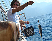 try to catch a fish - there are                                 fishing lines on every boat